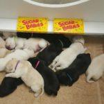 sugar babies in box