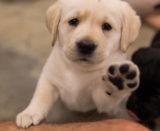 puppy hi