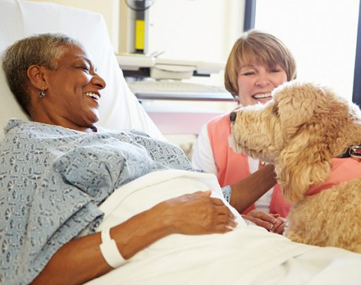touch_poodle_dog_hospital