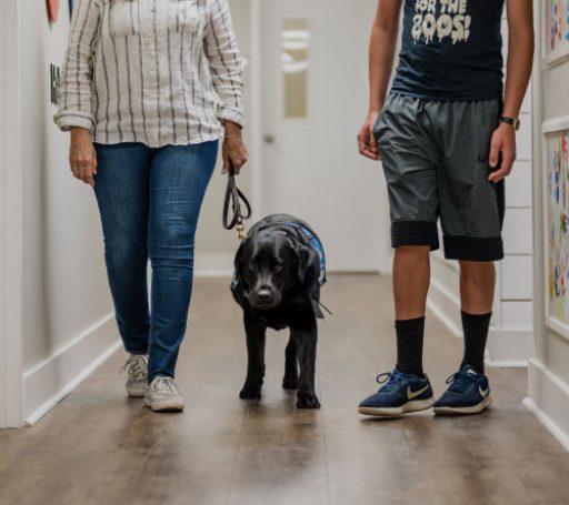 walking_assistance_dog
